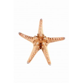 Rigid Cushion Starfish